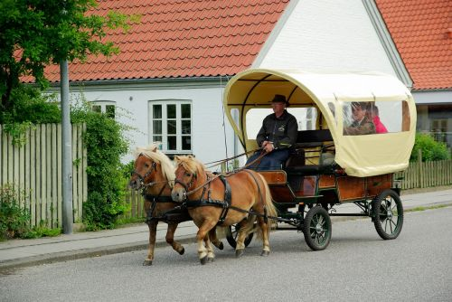 denmark cart ponies
