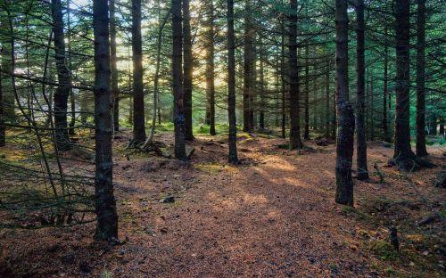 dense forest green