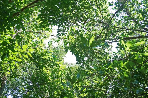 Dense Foliage With Some Sky Patches