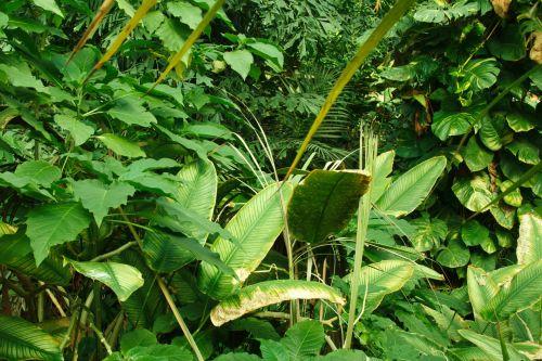 Dense Green Vegetation