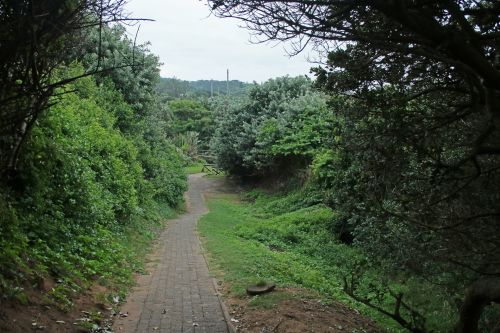Dense Vegetation Flanking Path