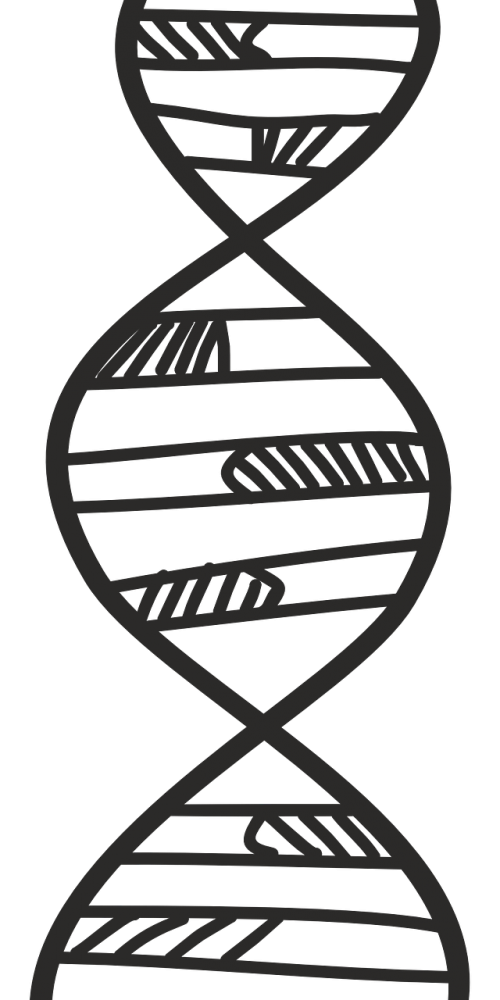 deoksyrybonukleinowe acid thread strands of dna