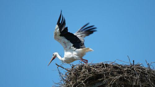 departure stork rattle stork