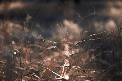 depth of field dry grass