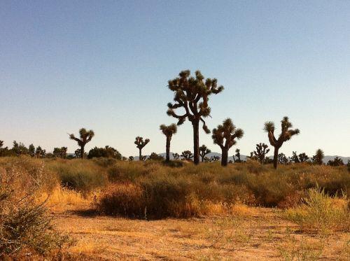 dykuma,kaktusas,kraštovaizdis,gamta,dykumos kraštovaizdis,augalas,Vakarų,pietvakarius