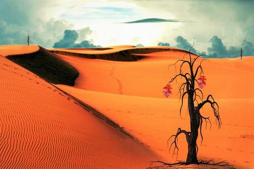 desert tree clouds