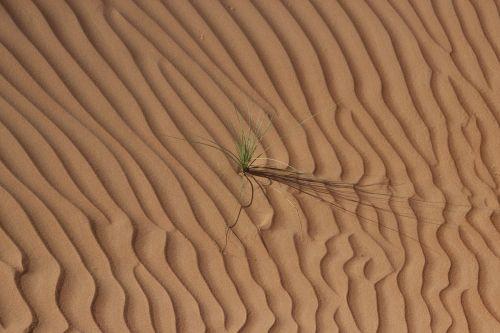 desert oman sand