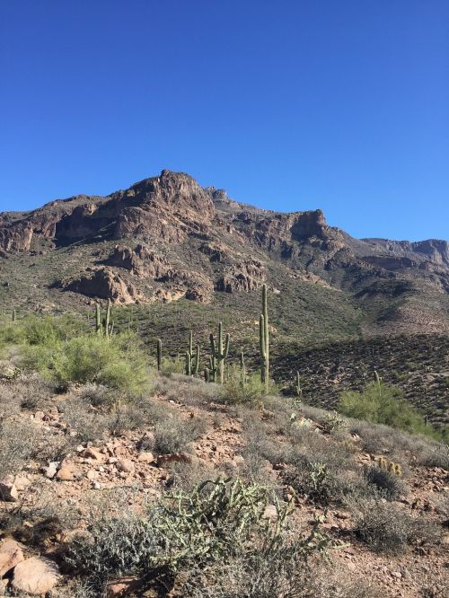 desert cactus arizona