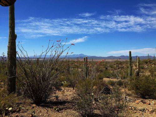 desert,landscape,desert landscape,arizona,nature landscape,beautiful landscape,scenic,southwest,cactus
