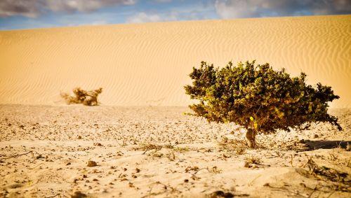 desert plant sand