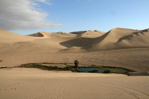 oasis desert dune