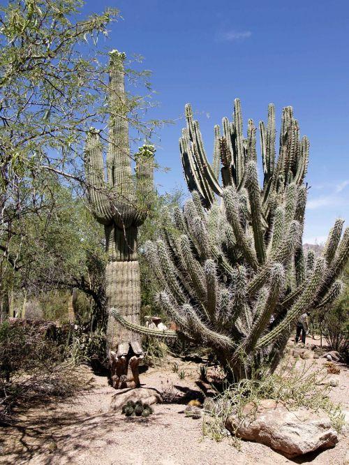 desert landscape scenery