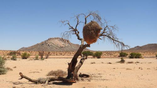 desert namibia kalahari desert