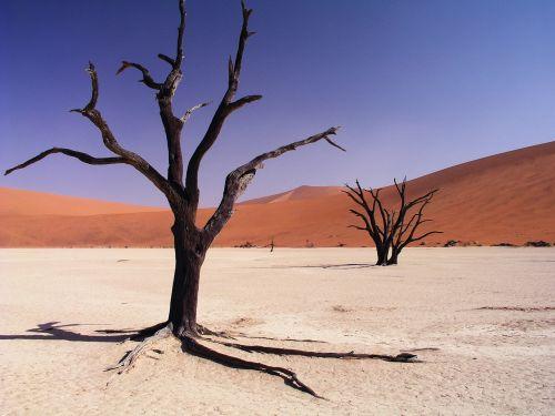 desert drought dry