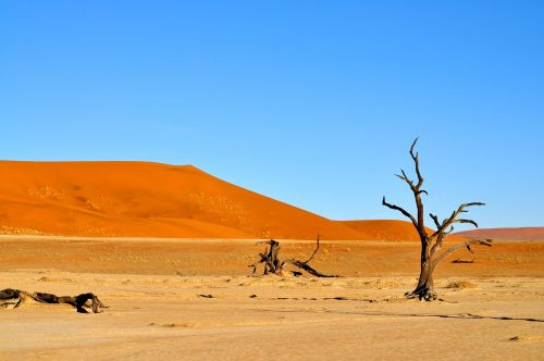 desert nature namibia