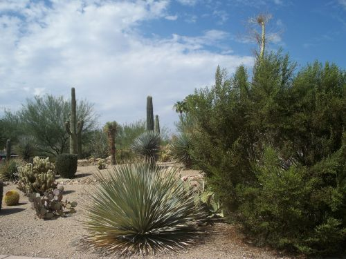 desert cactus sand