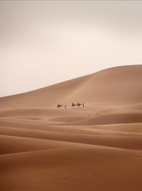 desert caravan camel