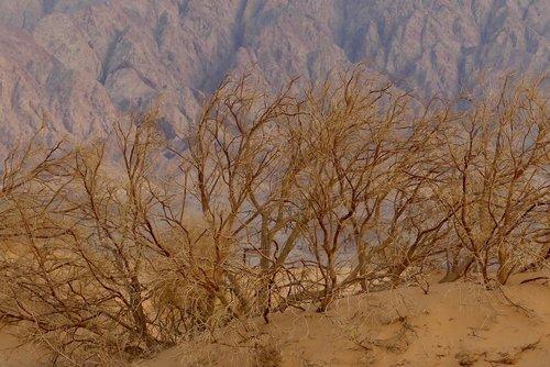 desert  jordan  sands