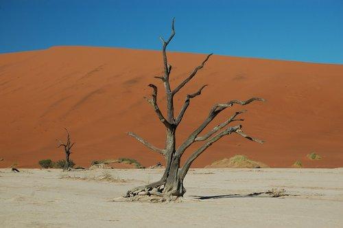 desert  drought  sand