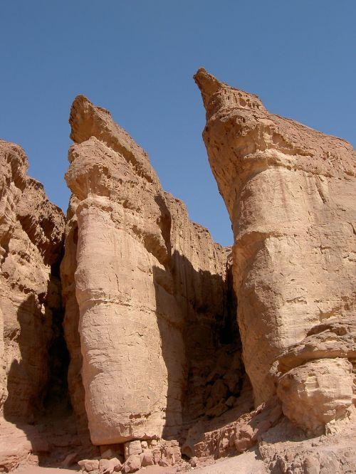 desert nature dry