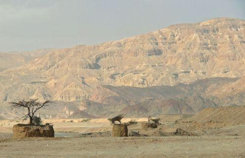dykuma,Izraelis,medžiai,kraštovaizdis,sausas,desolate