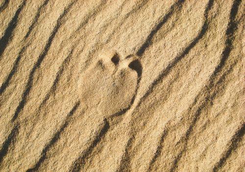 desert sand footprint