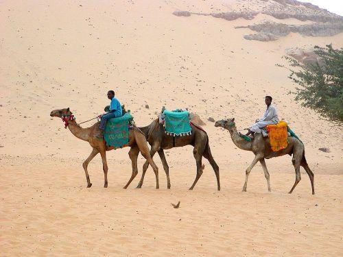 desert camels desert ship
