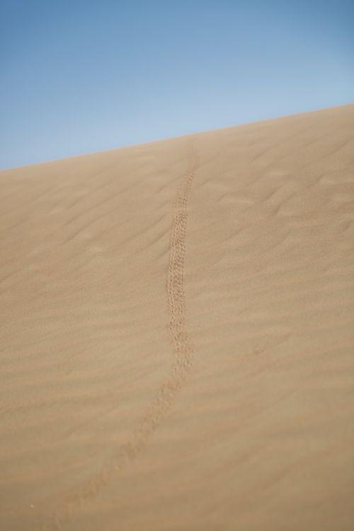 desert scorpion trails