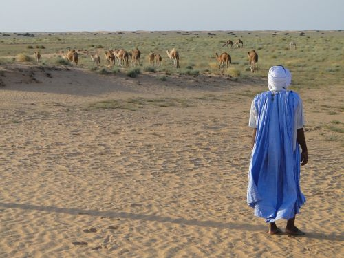 desert camels arab