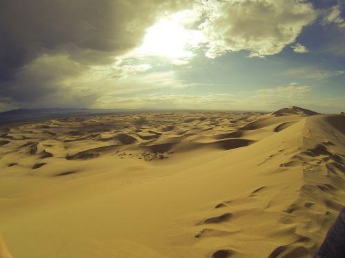 desert ferns suburbs