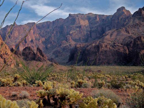 desert arizona cactus