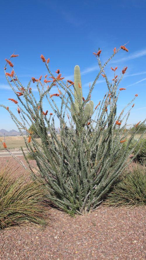 desert plant nature