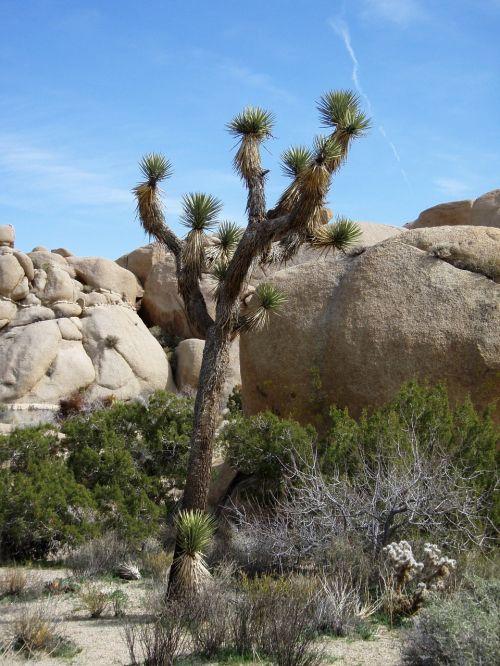 desert plant national park mojave desert