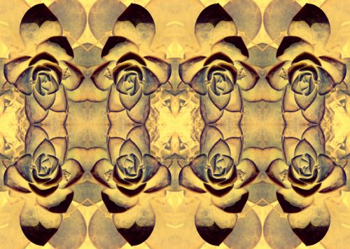 Desert Rose Repeat Pattern
