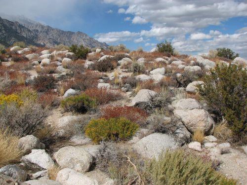 Desert Scenic Landscape