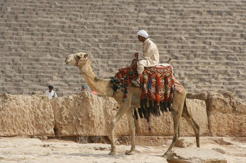 desert ship  camel  egypt