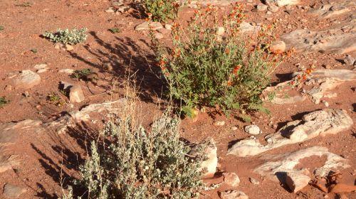 Desert Soil