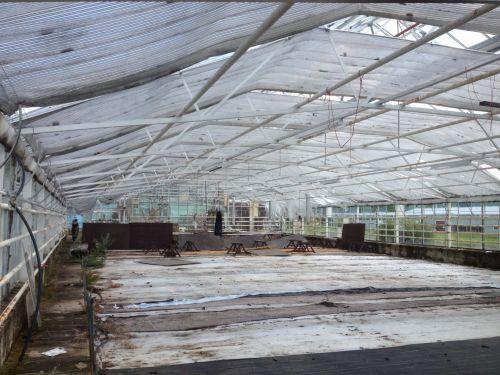 Deserted Greenhouse
