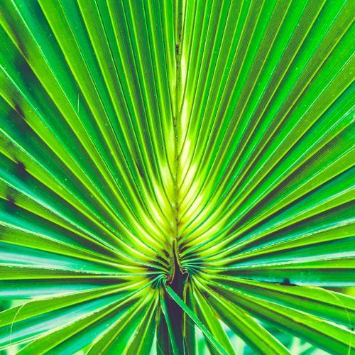 design florida green