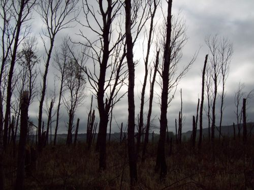 Desolate Forest
