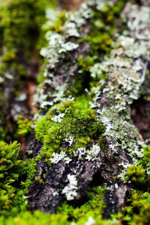 Detail Of Moss