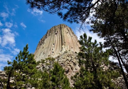 devils tower trees wyoming
