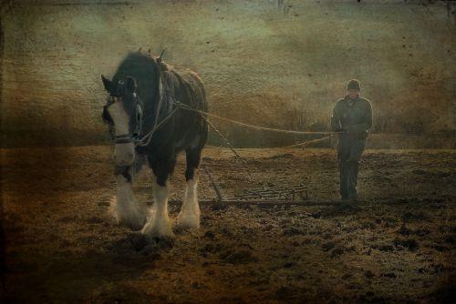 devon uk horse