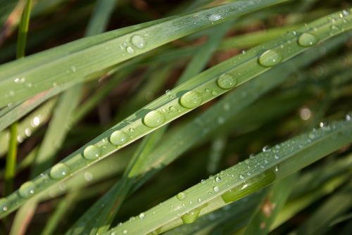 dew foliage grass