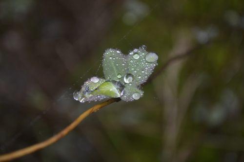 dew network autumn