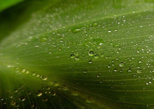 dew leaf morning