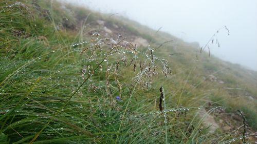 dew grass raindrop