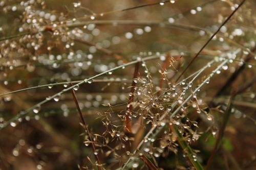 dew drop water