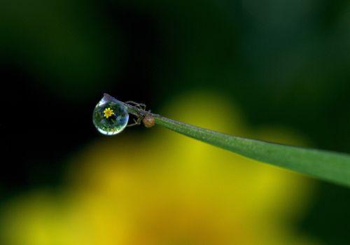 dew drop macro dew