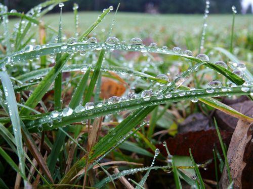 dewdrop grass grass with dew